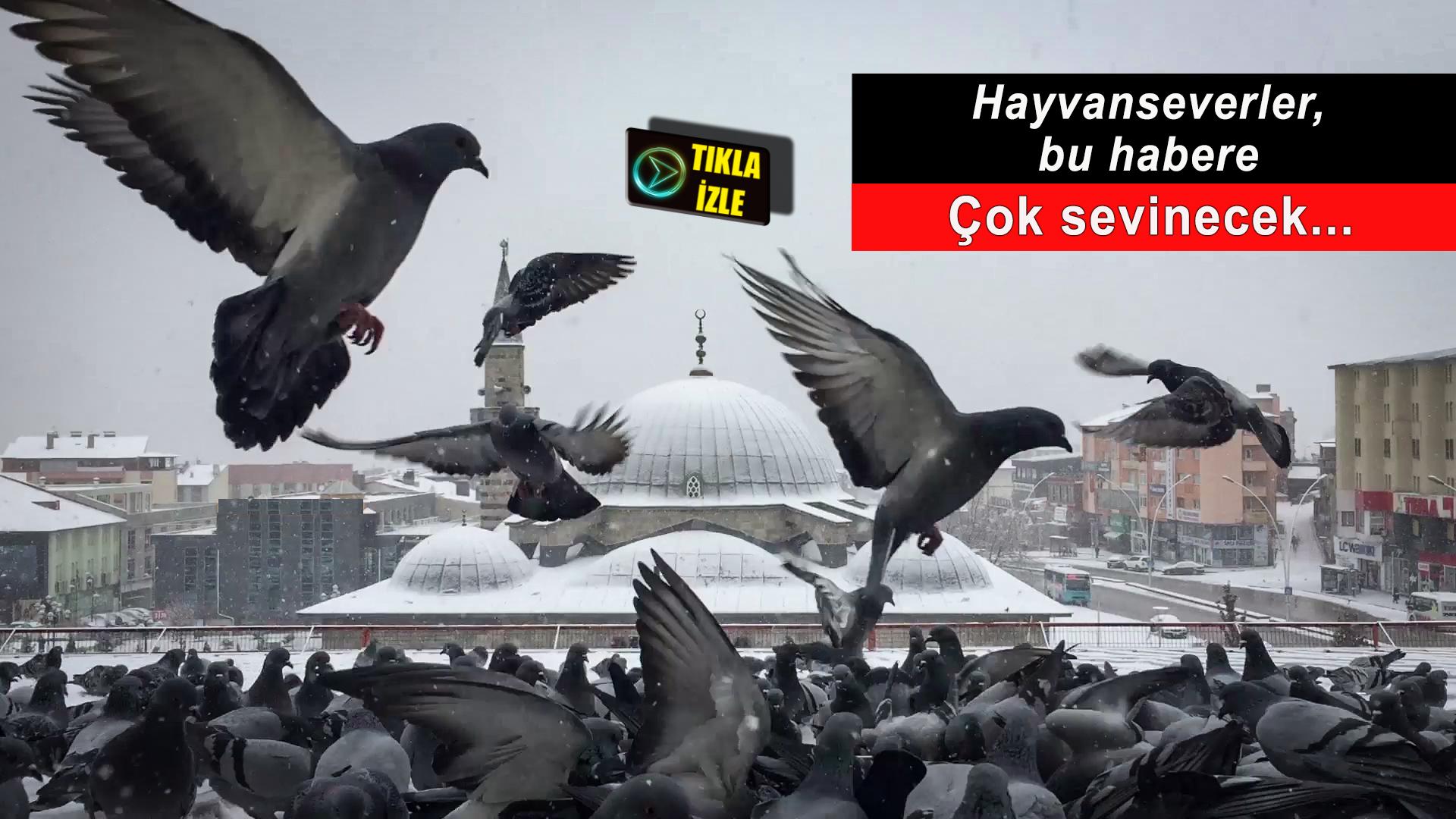 Yüzlerce güvercini her gün iki öğün besliyorlar